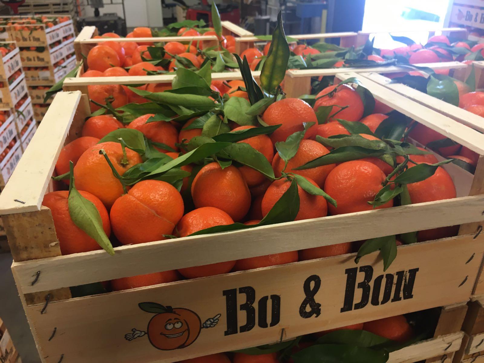 Clementine bo et bon.jpg