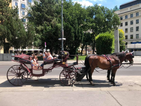 Vienna: The best FIVE family-friendly experiences