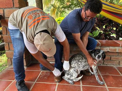Este domingo se celebrará el día departamental de protección animal