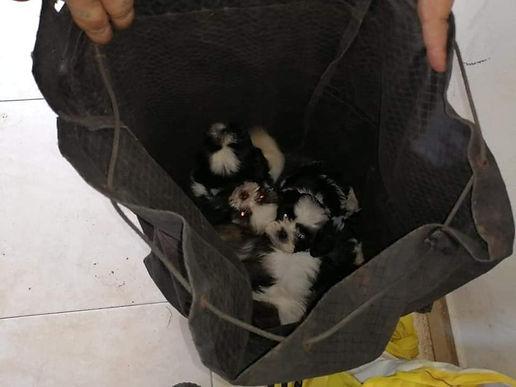 En Sogamoso, se roban a las mascotas