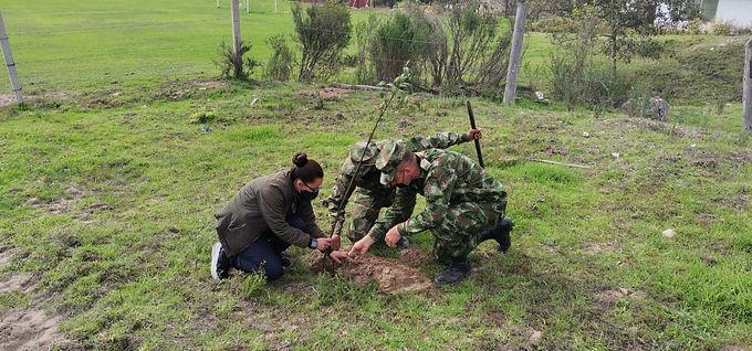 11.470 árboles sembrados por Corpochivor