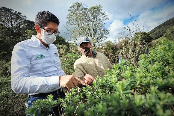 Siguen en la tarea de reforestar Boyacá. Más de 600 árboles por 1.200 bolsas de leche