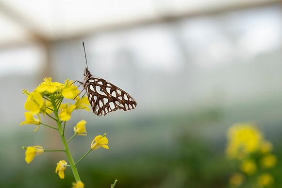 Boyacá es una de las tierras ricas en mariposas y biodiversidad