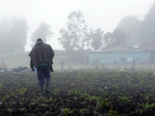 En Monguí 25 agricultores resultaron afectados por las heladas de los últimos días