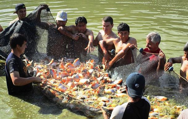 Garzón y Chitaraque con las más grandes ferias piscícolas