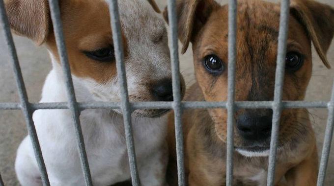 Cundinamarca, Casanare, Santander, Antioquia, Valle y Tolima, donde más se presenta maltrato animal