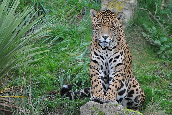 Latinoamérica ha perdido mamíferos, aves, anfibios, reptiles y peces