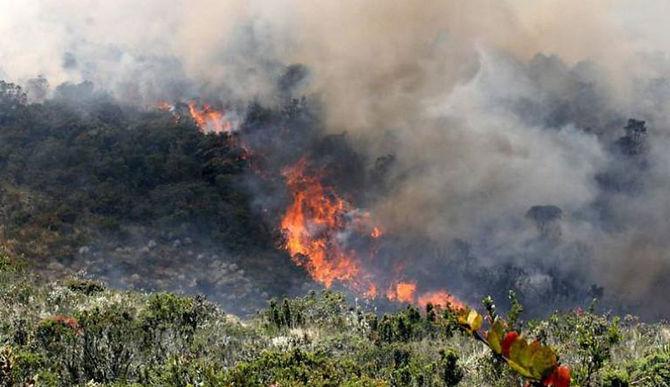 Van 16 incendios forestales en 2021