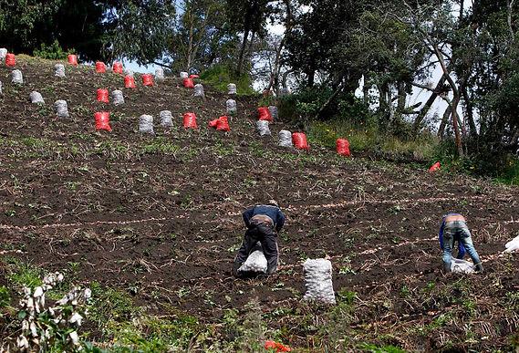 Agricultura registra el mayor número de enfermedades laborales en los primeros seis meses del año