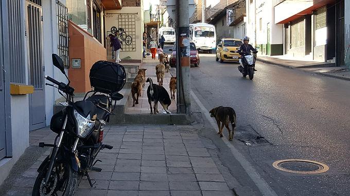 Tunja obligada a proteger a animales de calle