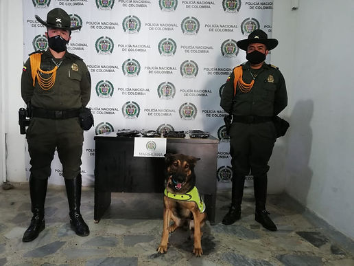 'Cuco' encontró 1.900 gramos de marihuana