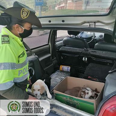 Incautaron ocho cachorros