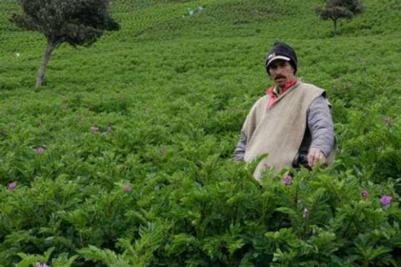 Proyecto de Ley para ayudar a 140 mil productores