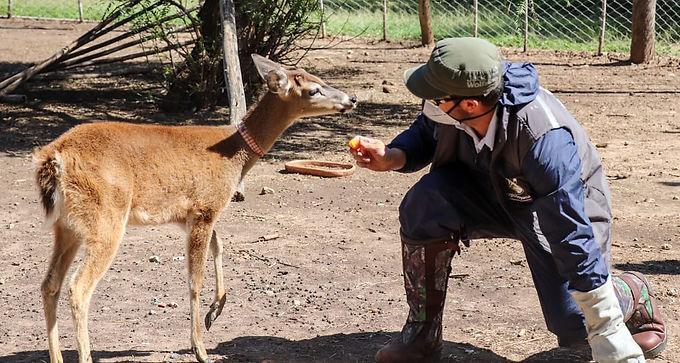 Corpoboyacá realizó decomiso preventivo de cuatro especies de fauna silvestre en el municipio de Sáchica