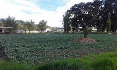 Lluvias generaron emergencia en la vereda Tocogua de Duitama
