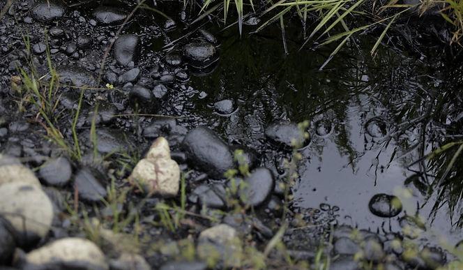 ¿Qué ha pasado con las investigaciones en favor del medio ambiente de Puerto Boyacá?