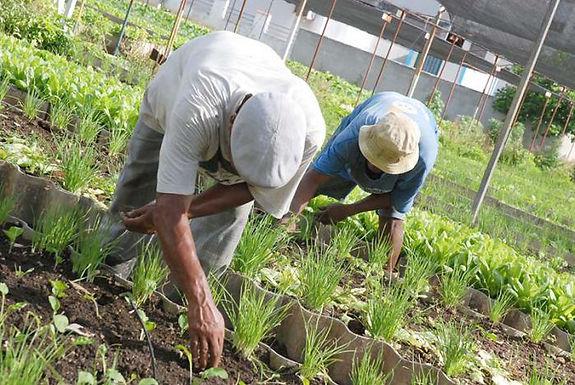 Durante el primer semestre el sector agrícola tuvo la mayor accidentalidad laboral