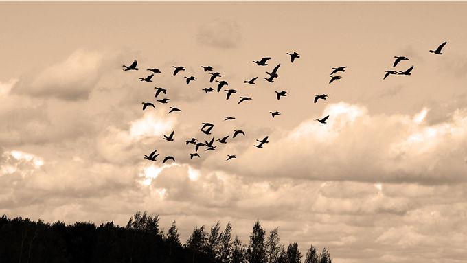 Las aves serán las invitadas a los cielos boyacenses
