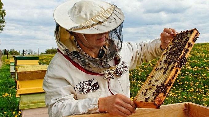 Abierta la convocatoria para implementación de la apicultura