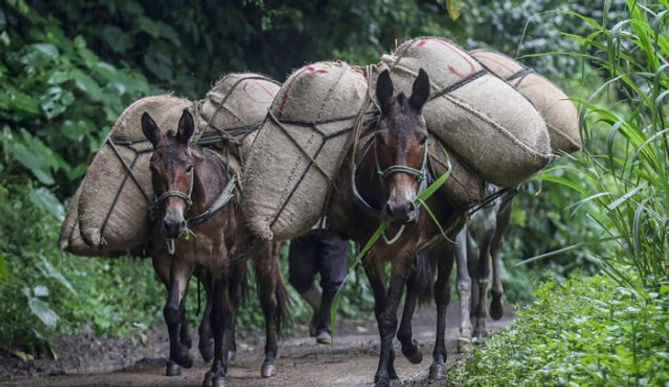 Por importar 14 millones de toneladas de alimentos Dignidad Agropecuaria va a paro