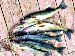 Fishing & Investing