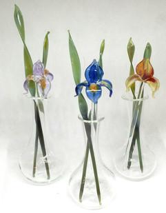 Glass irises
