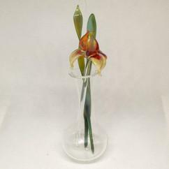 glass iris