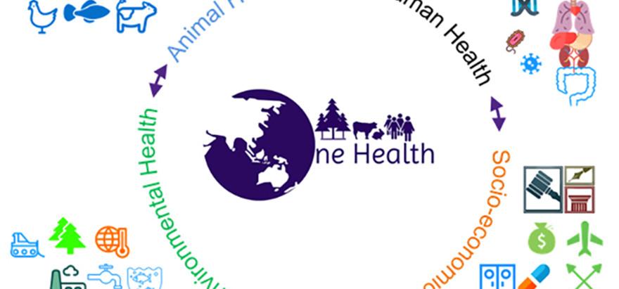 A Crash Course on One Health