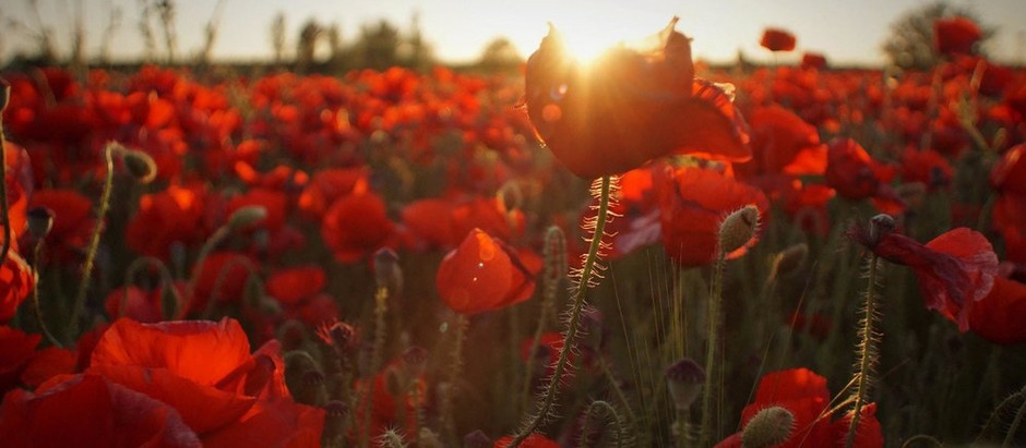 The Remembrance Poppy: a Short History