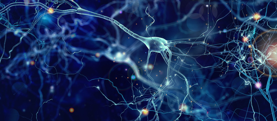 Navigating the Excitement Surrounding Mirror Neurons