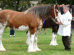 New Ridden Heavy Horse Classes for 2021