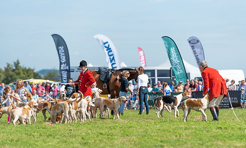 Huntsman and hounds at a country show (2