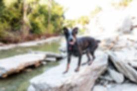 Happy Dog on a hike dog training austin