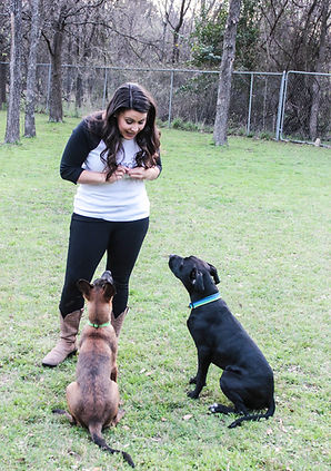 Jennifer Burns Dog Trainer Private Training Lessons