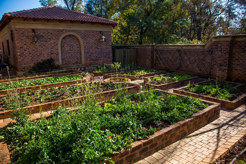 Our organic herb and vegetable garden.