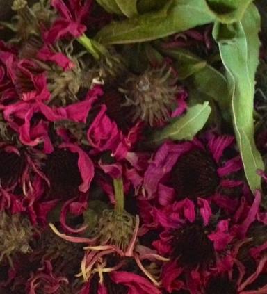 Medicinal Plants Spirit House