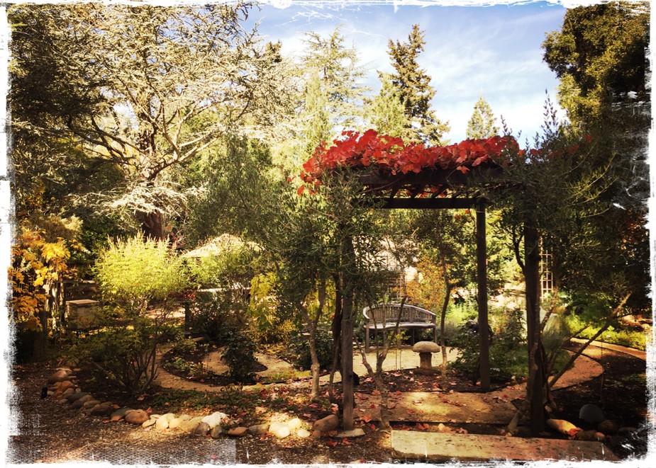 Spirit House Medicinal Garden