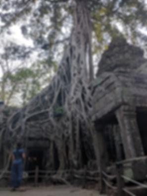 Ta Prohm Tomb Raider Temple