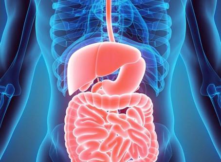 Immunsystemet og slimhinnene i tarmen