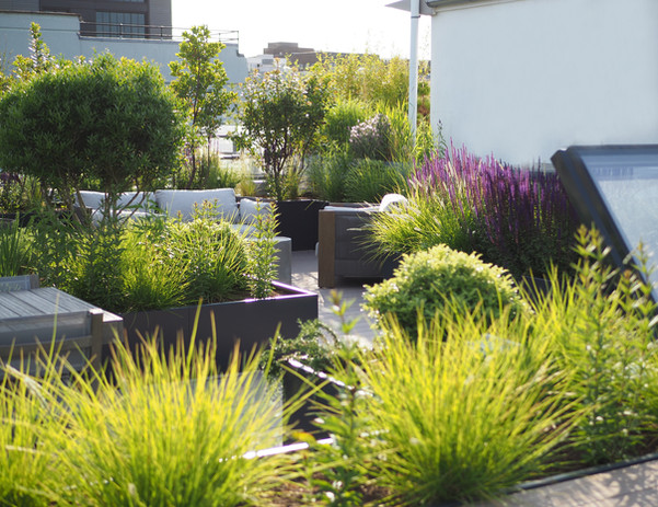 Rootop planting