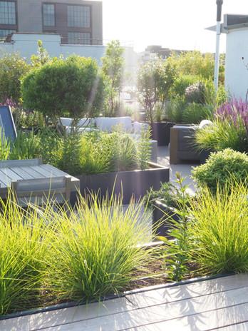 Rooftop garden planting