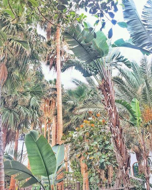 Club Tropicana 💥 how amazing this bar courtyard we came across on a morning jog..jpg
