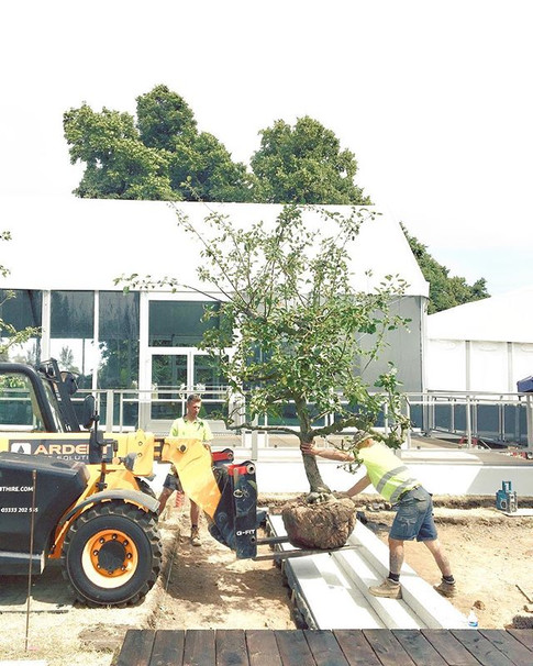 #heartdropmoment🤭😳 incredible apple 🍎 trees are being lifted in place over the water feature 🙆🏻♀️ _the_rhs Hampton Court Palace Flower Show