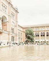lone tree 🌳 - V&A courtyard 🏫🏛🏫