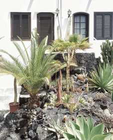 🌴 🌵 🚪🌵🌵🌴🚪 🌋 Hands up who want this as their front garden 🙊🙌🏻 one of hundreds we've come across in Lanzarote, each one different and unique c