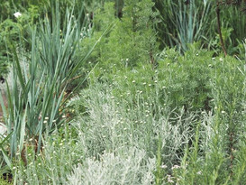 Garden planted last July.jpg