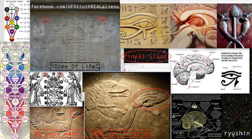 We Were Made Pineal Gland Being Placed Into The Tree Of Life