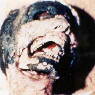 mutilation-3.jpg