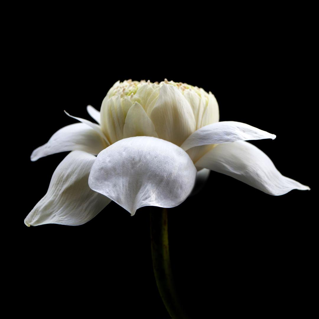 W Lotus 09