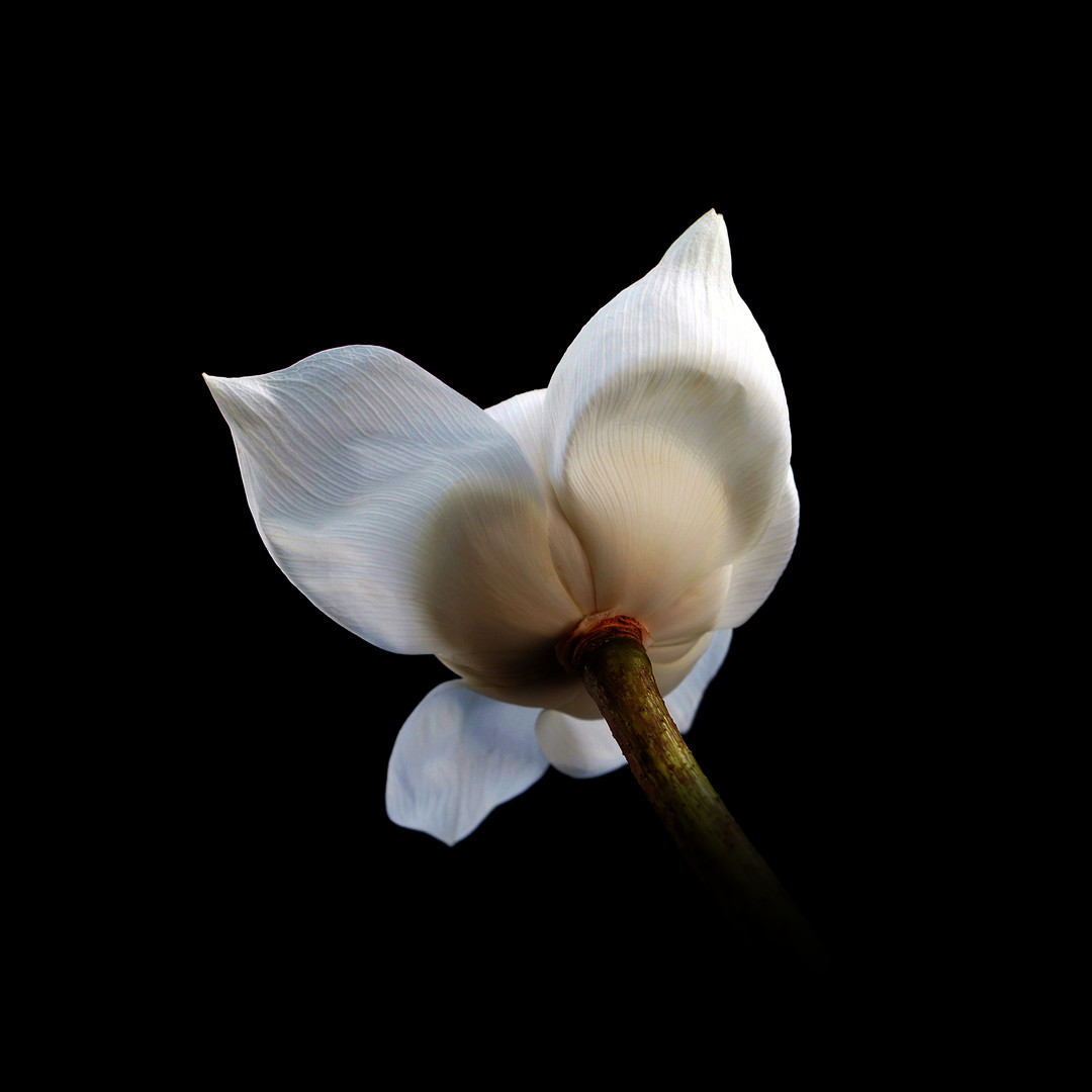 W Lotus 08